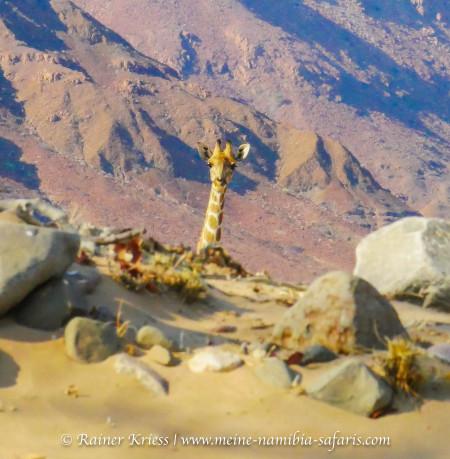 Geführte Damaraland Camping/Lodge Tour 2020