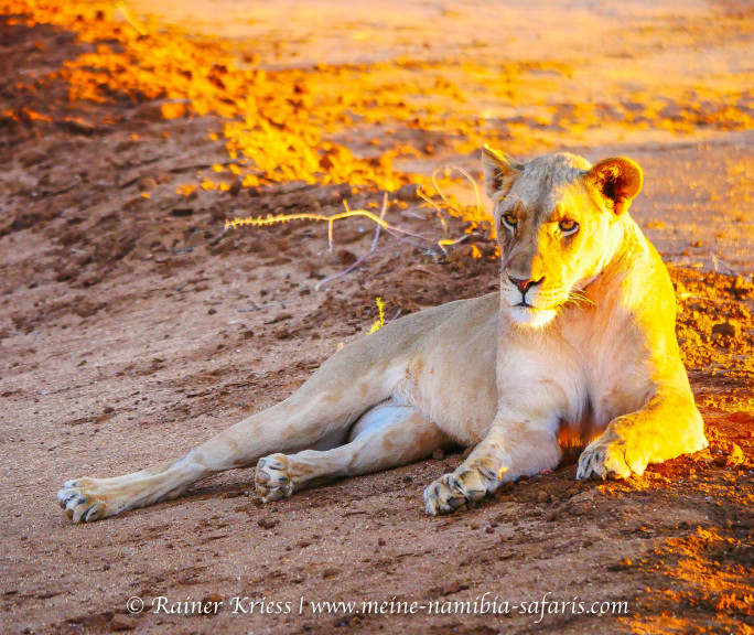 Namibia Luxus der Weite
