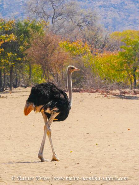 Namibia Classic Tour