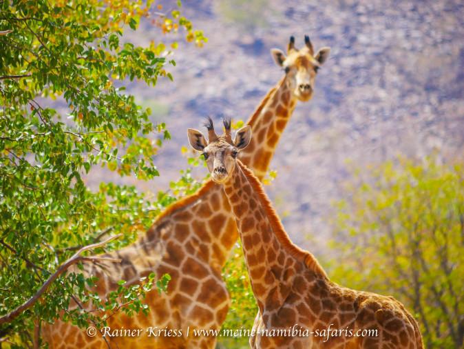 Namibia Kurz Tour