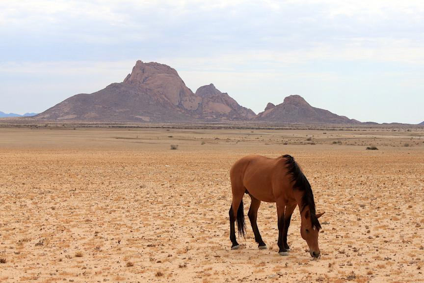 Die wilden Pferde von Garub
