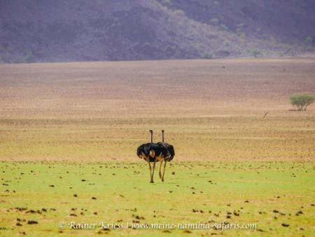 Namibia für Genießer Tour