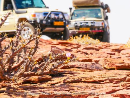 Geführte Damaraland Camping & Lodge Tour