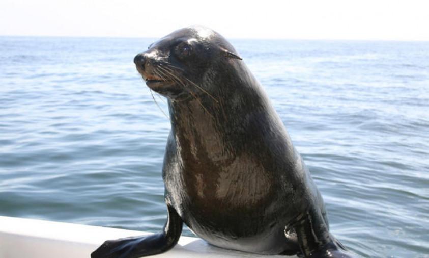 Mola Mola Dolphin Tour