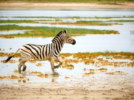 Geführte Botswana Camping & Lodge Tour